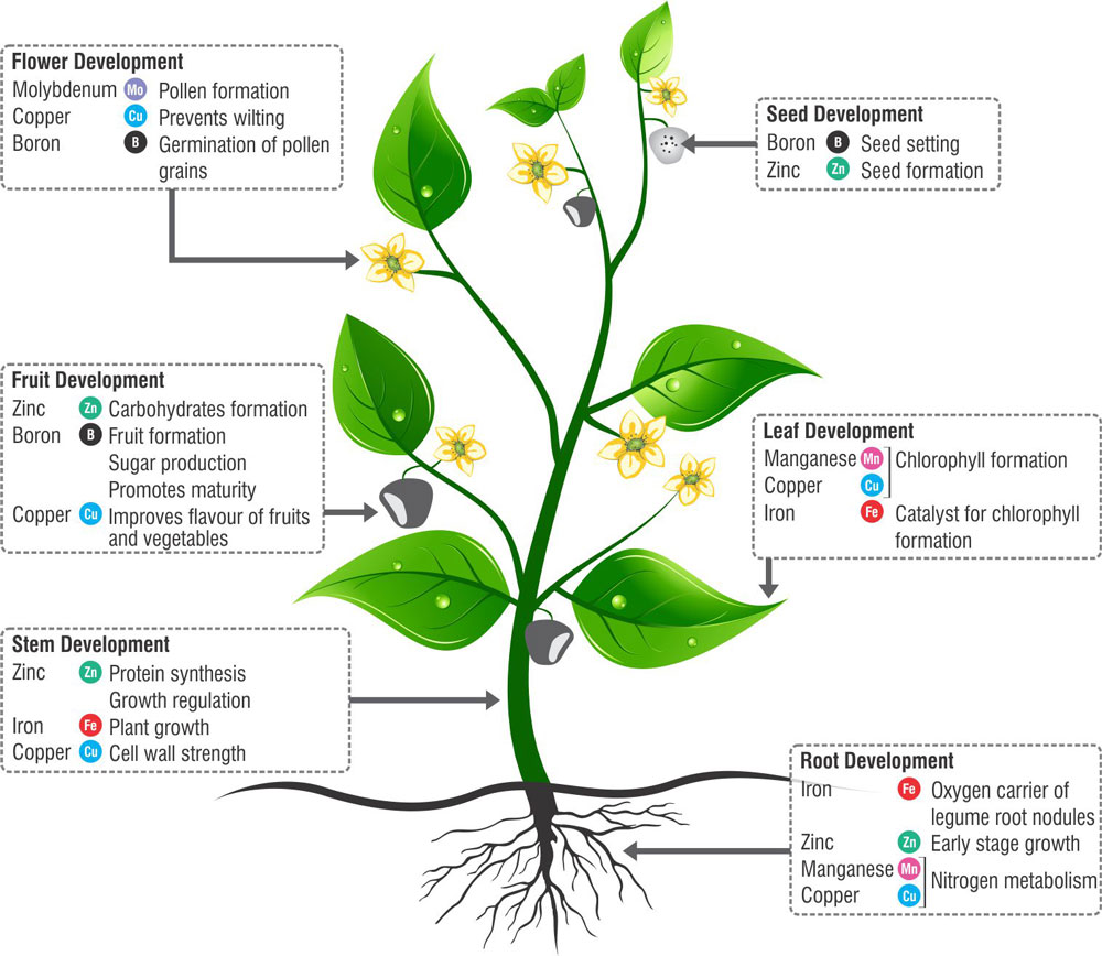 Essential Micronutrients for plants growth